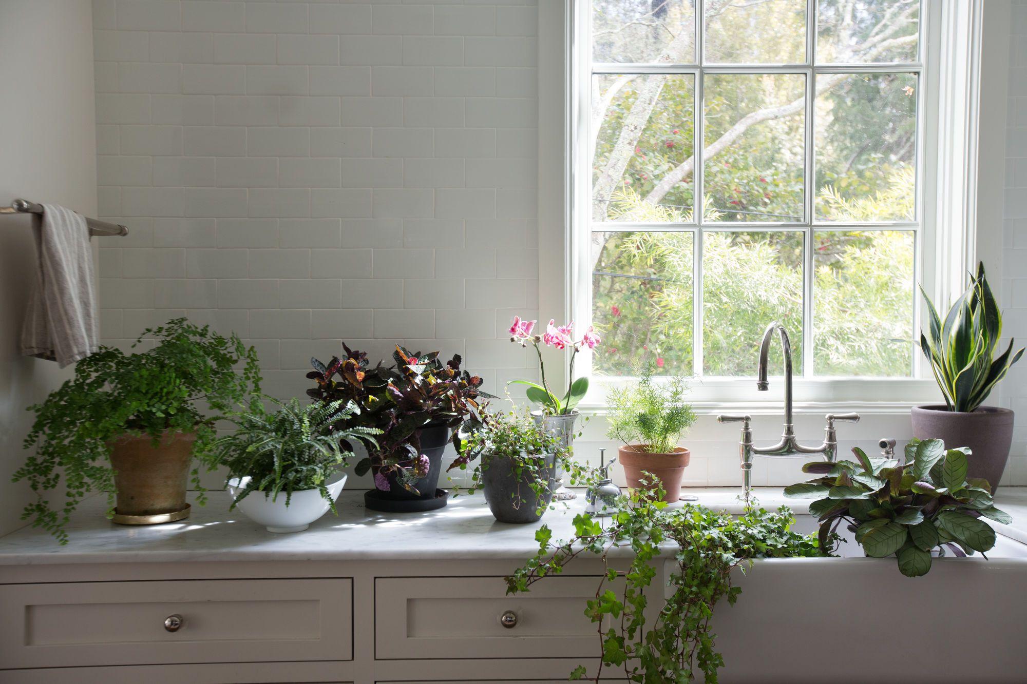 best houseplants 9 indoor plants for low light low lights