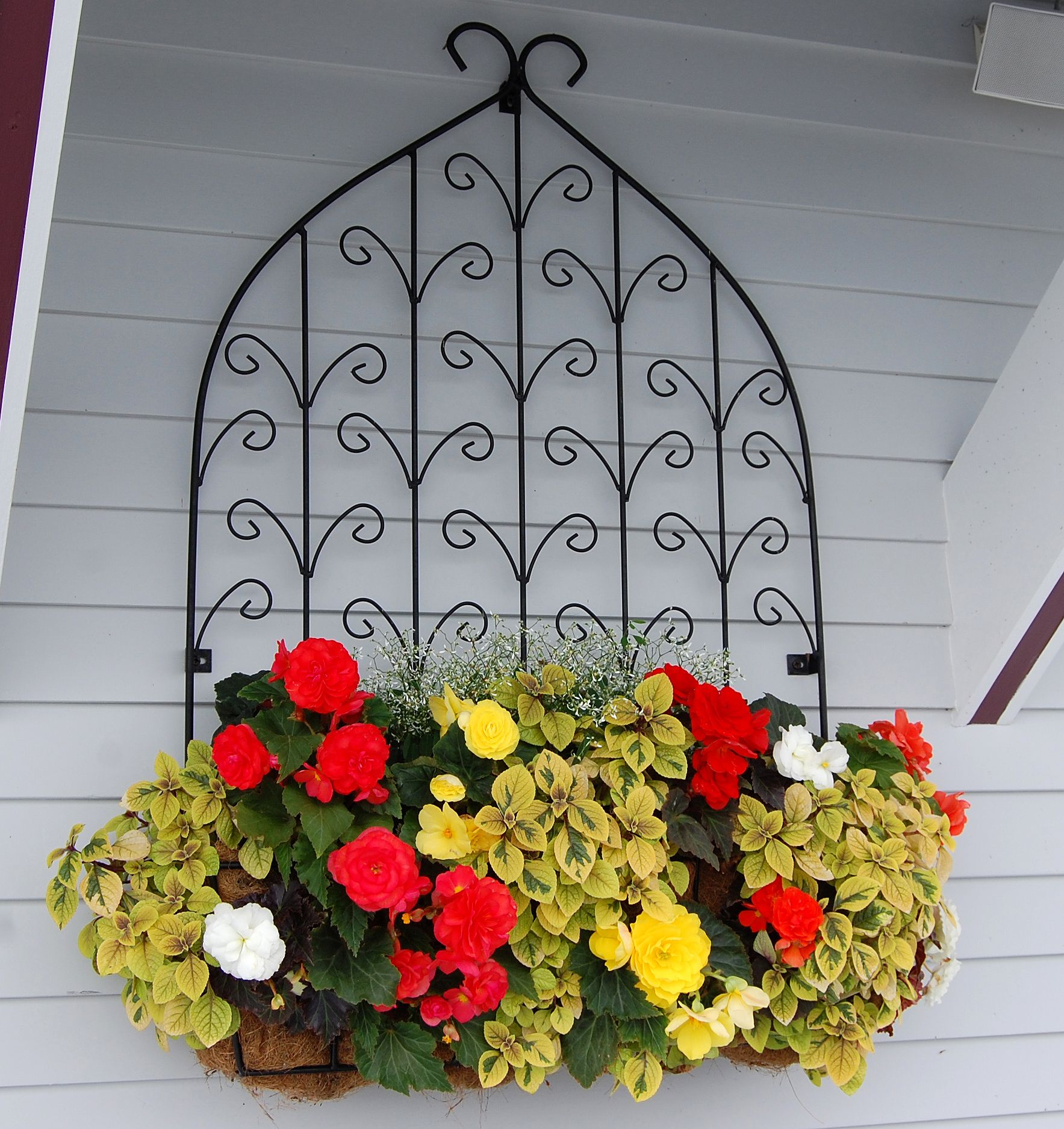 Quot Window Box Planter Contains Diamond Frost Euphorbia And