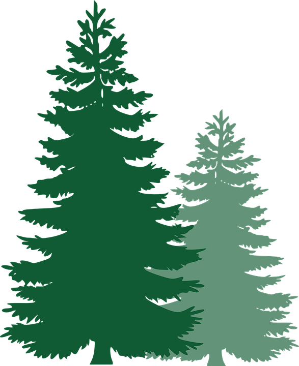 Free Image On Pixabay Pine Trees Spruce Trees Pine Tree Silhouette Tree Stencil Tree Clipart