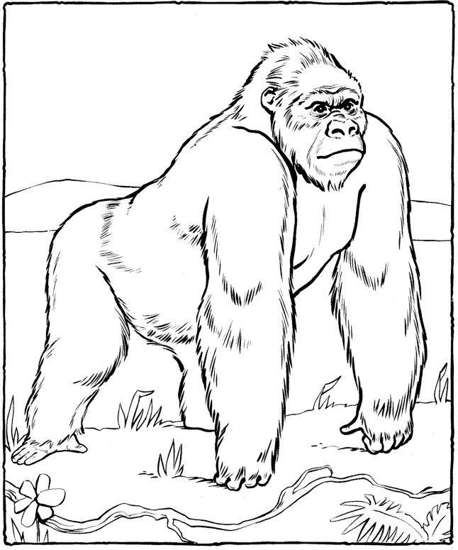 Gorille Dessin Gorille Coloriage Animaux Dessin