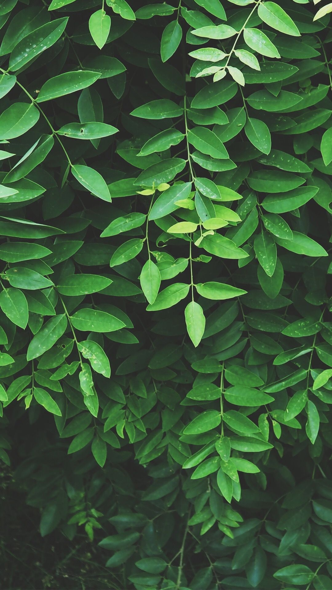 Leafs Plant Green Aesthetic Green Wallpaper Nature Aesthetic