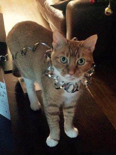 Cat S Cat Adoption London Cat 777 Cats 4 Catch Up Meow P