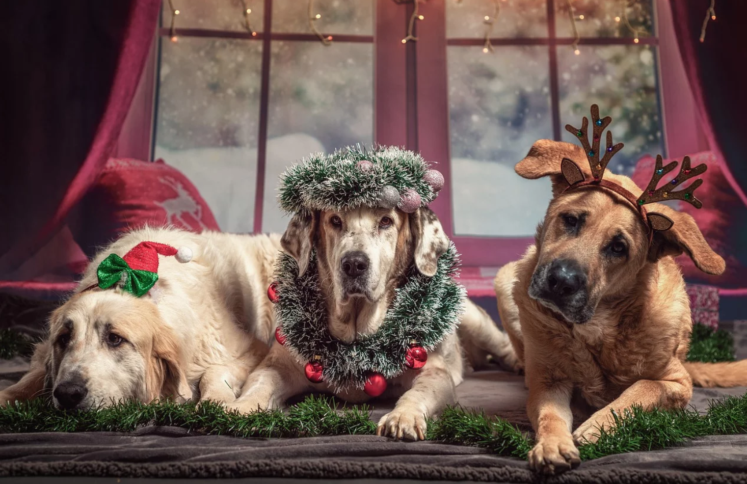 Protecting Your Pet 4 Holiday Hazards Dog Christmas Gifts Pets Dogs