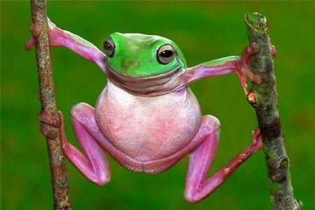 Real Pink Animals | Found on animals.desktopnexus.com