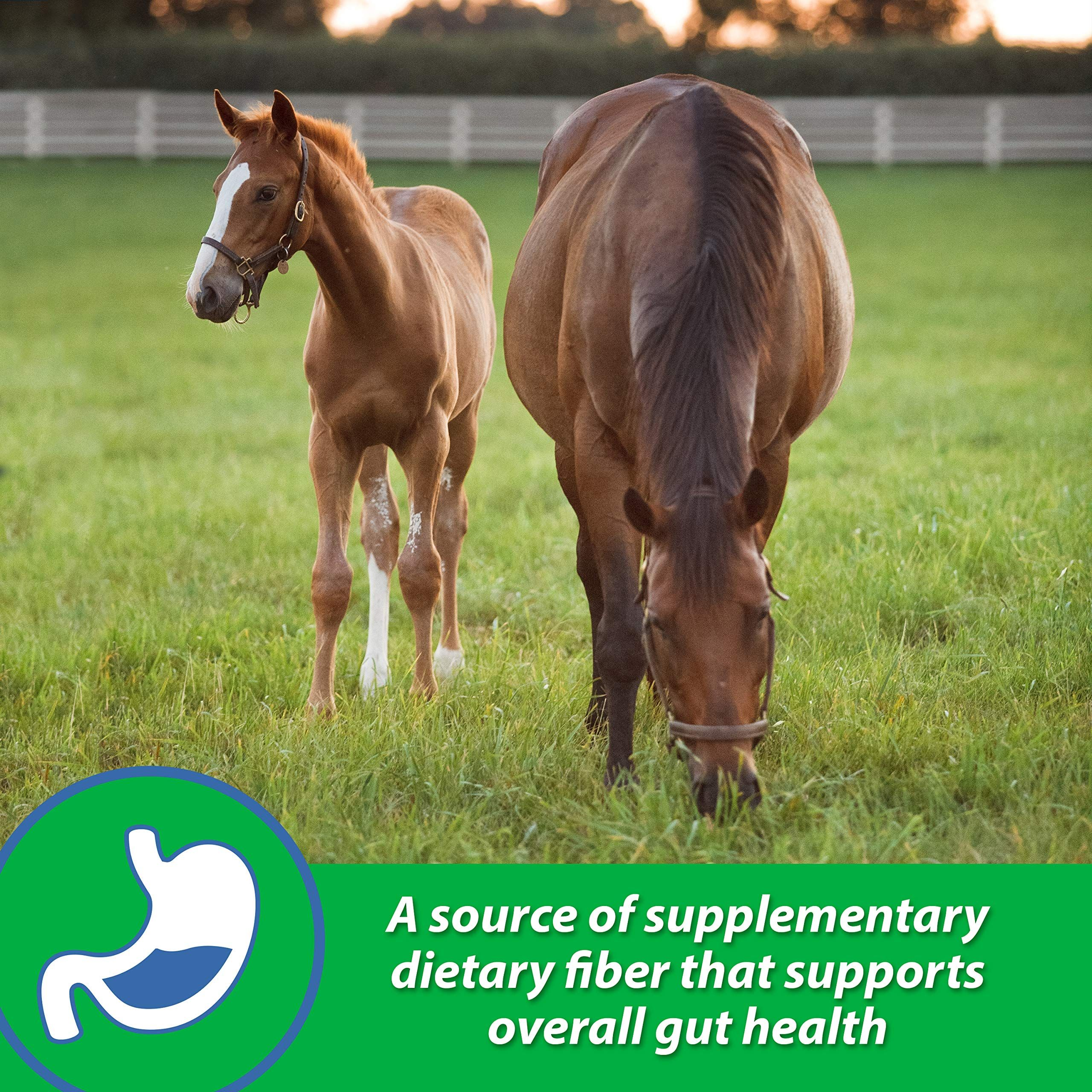 Farnam Sand Clear Digestive Aid For Horse Ad Clear Ad Sand Farnam Horse Pets Online Horses Horse Supplements
