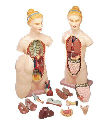 Anatomy Jane and Other Anatomy Models | Anatomy models ...