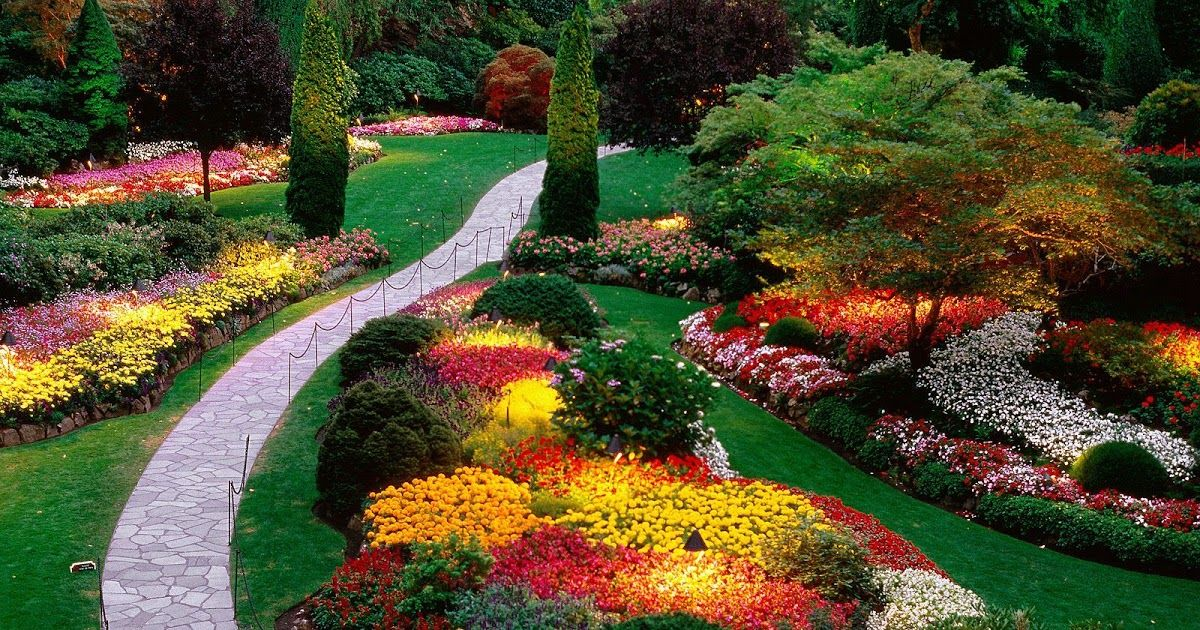 Image Result For Butchart Gardens In  Image Result For Butchart Gardens In  Image Result For Butchart Gardens In  Image Result For Butchart Gardens In  Image Result For Butchart Gardens In  Image Result For Butchart Gardens In  Image Result For Butchart Gardens In Winter  Enjoy the solitude winter brings and take in the subtle beauty of our shrubs trees and flowers from delicate snowdrops to lush hellebore..From colourful florals in the day to subtle plays of light and shadow in the evening summer offers breathtaking drama from dawn past dusk..Colourful lights carollers ice skating and festive fareChristmas is a cheerful time of year at The Gardens. Experience the Magic of Christmas at The Gardens.. #butchartgardens