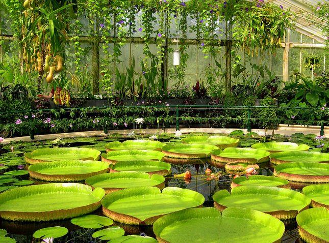 Royal Botanical Gardens Kew Herbarium