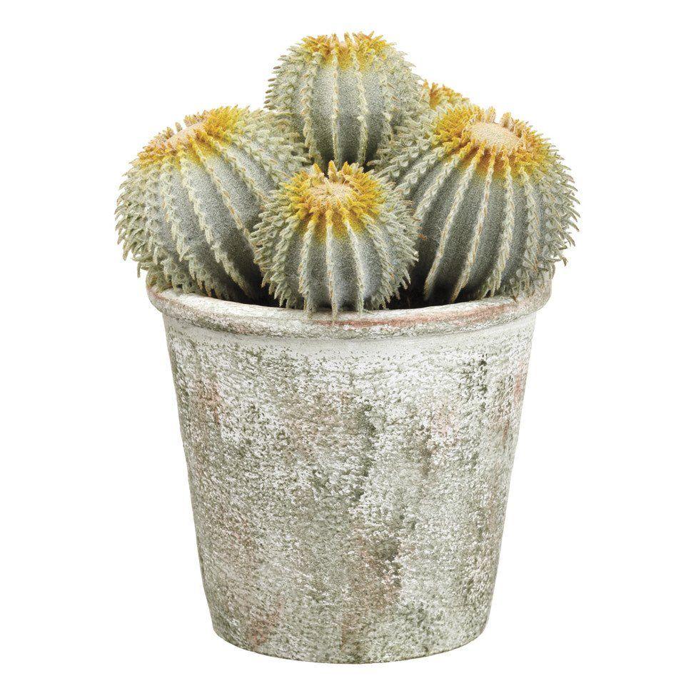 """9"""" Potted Barrel Cactuses!"""