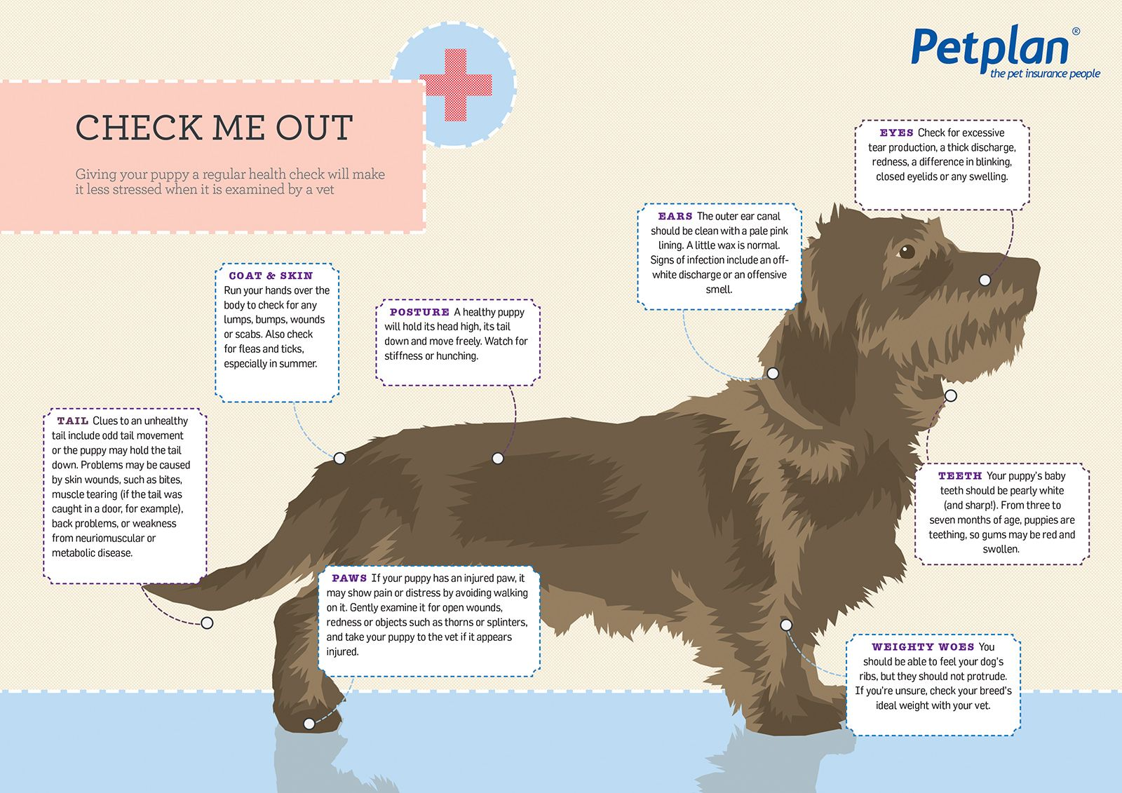 Check Out These Sizzling Dog Health Tips For More Info Follow Our Blog Www Petplan Com Au Www Petplan Co Dog Health Tips Dog Health Dogs And Puppies