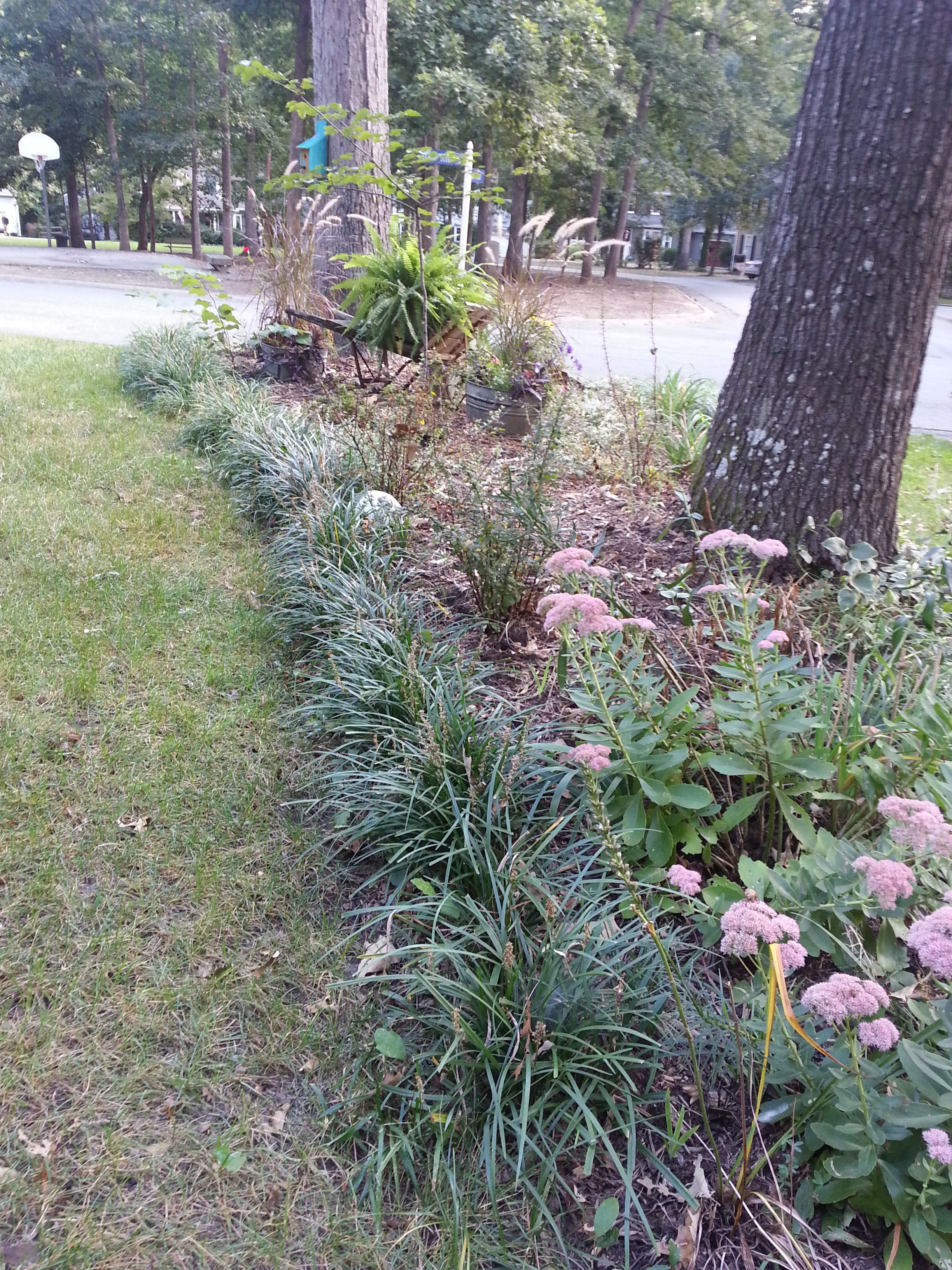 Durable Plants For The Garden: Liriope (Monkey Grass To Many) This Borders On Invasive