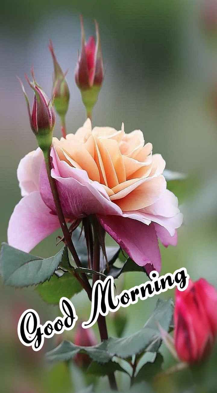 Chinnu Lkg 22119 I Love Chinnu Sharechat Good Morning Flowers Good Morning Beautiful Pictures Good Morning Roses