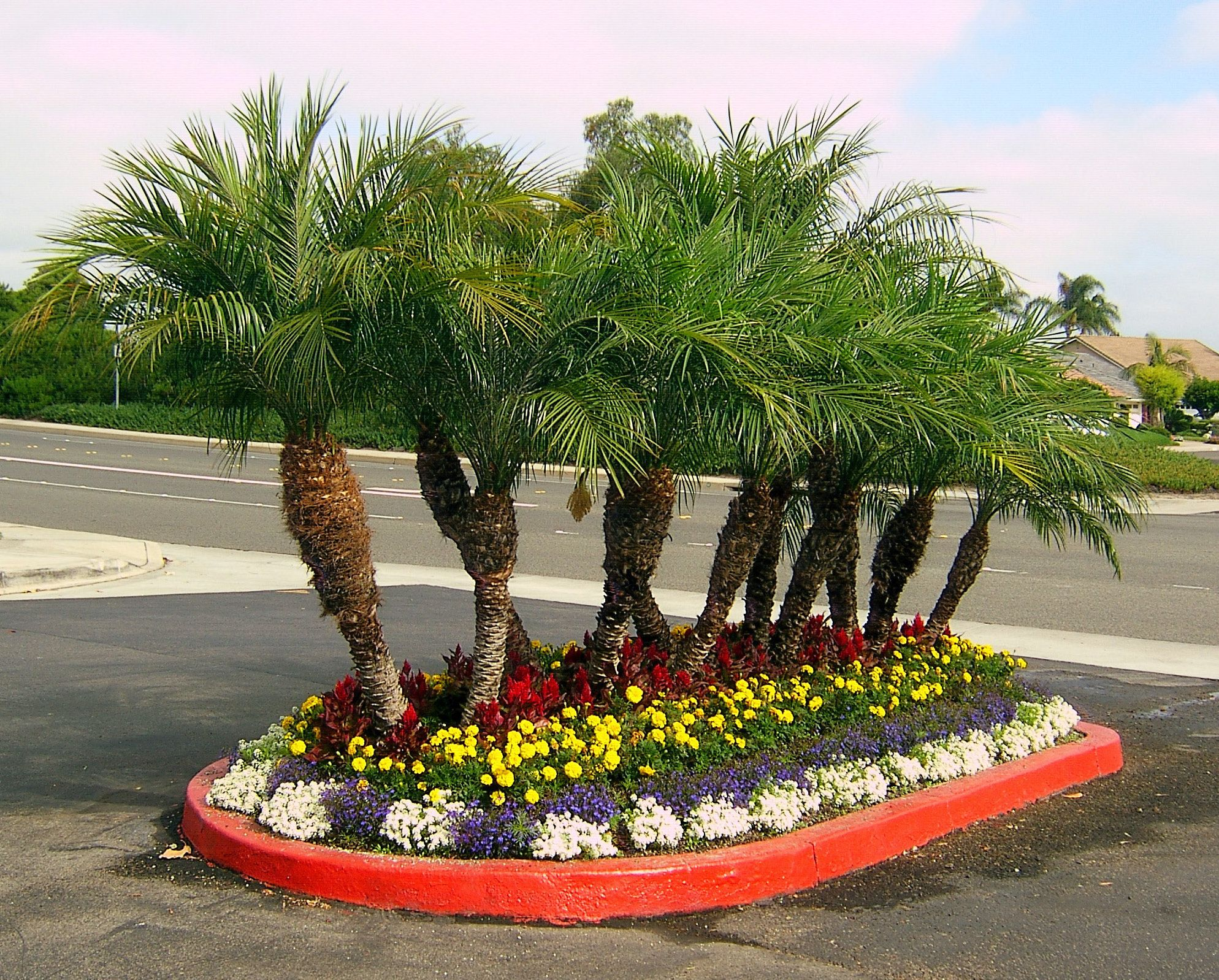 Palm trees in the landscape palm tree floral landscaping for Garden design with palms