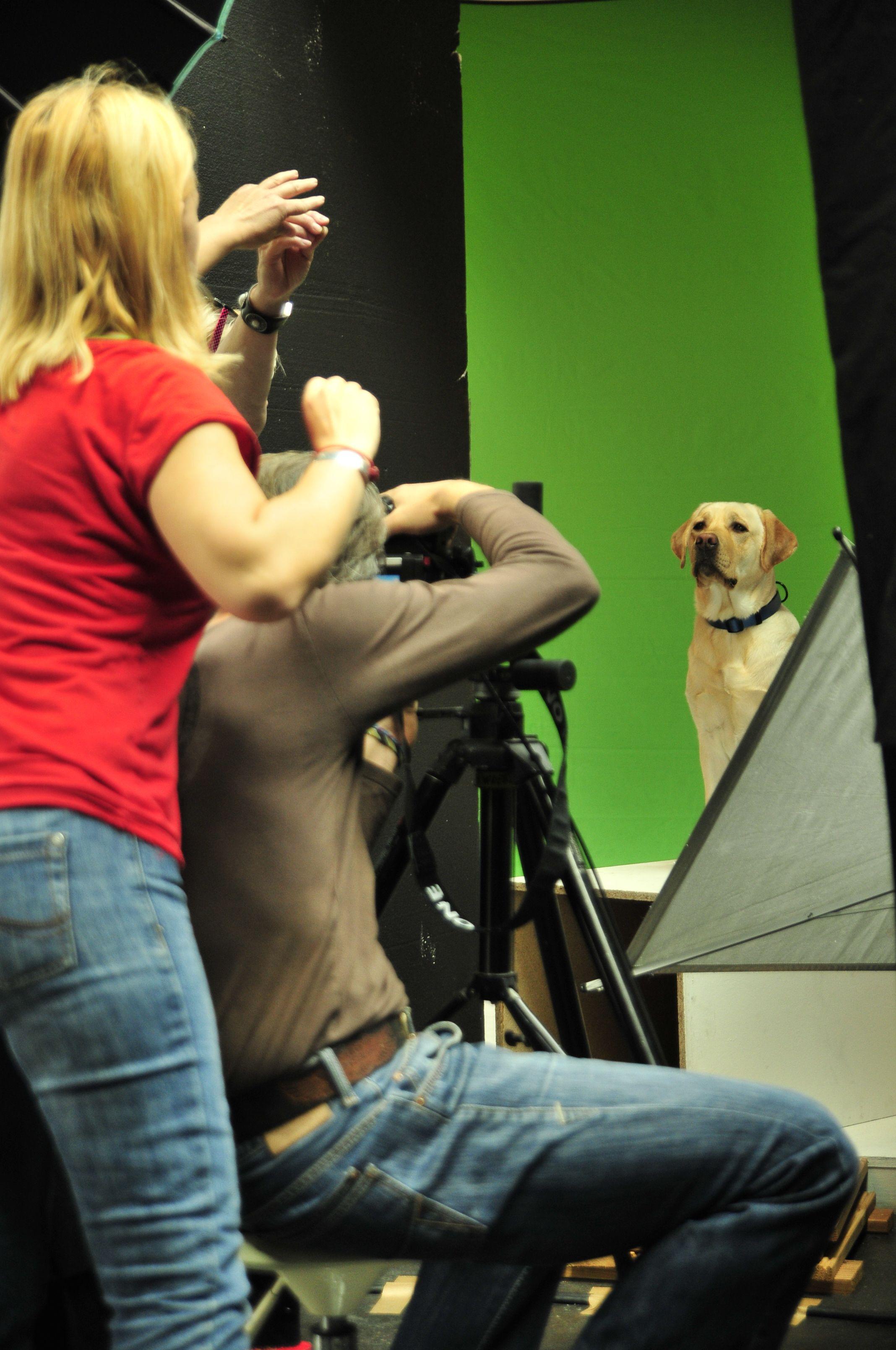 www.dogx2go.com