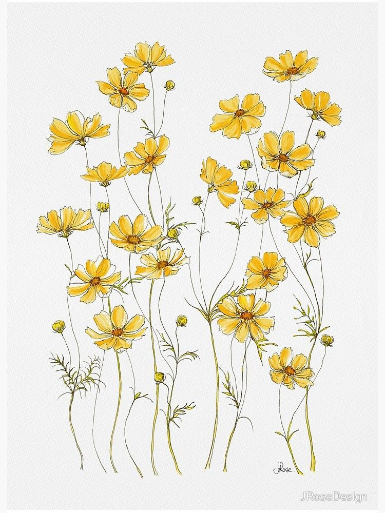 Yellow Cosmos Flowers Art Board Print By Jrosedesign Redbubble In 2020 Cosmos Flowers Flower Art Art