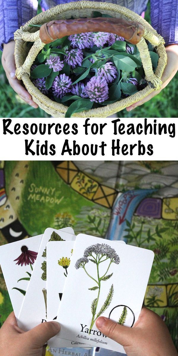 Teaching Kids About Herbs is part of Teaching kids - Ask any herbalist just beginning their journey into herbal education, and everyone I've met says they