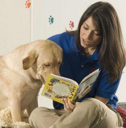 Disney World Pet Boarding Best Friends Pets Pet Resort Luxury Pet