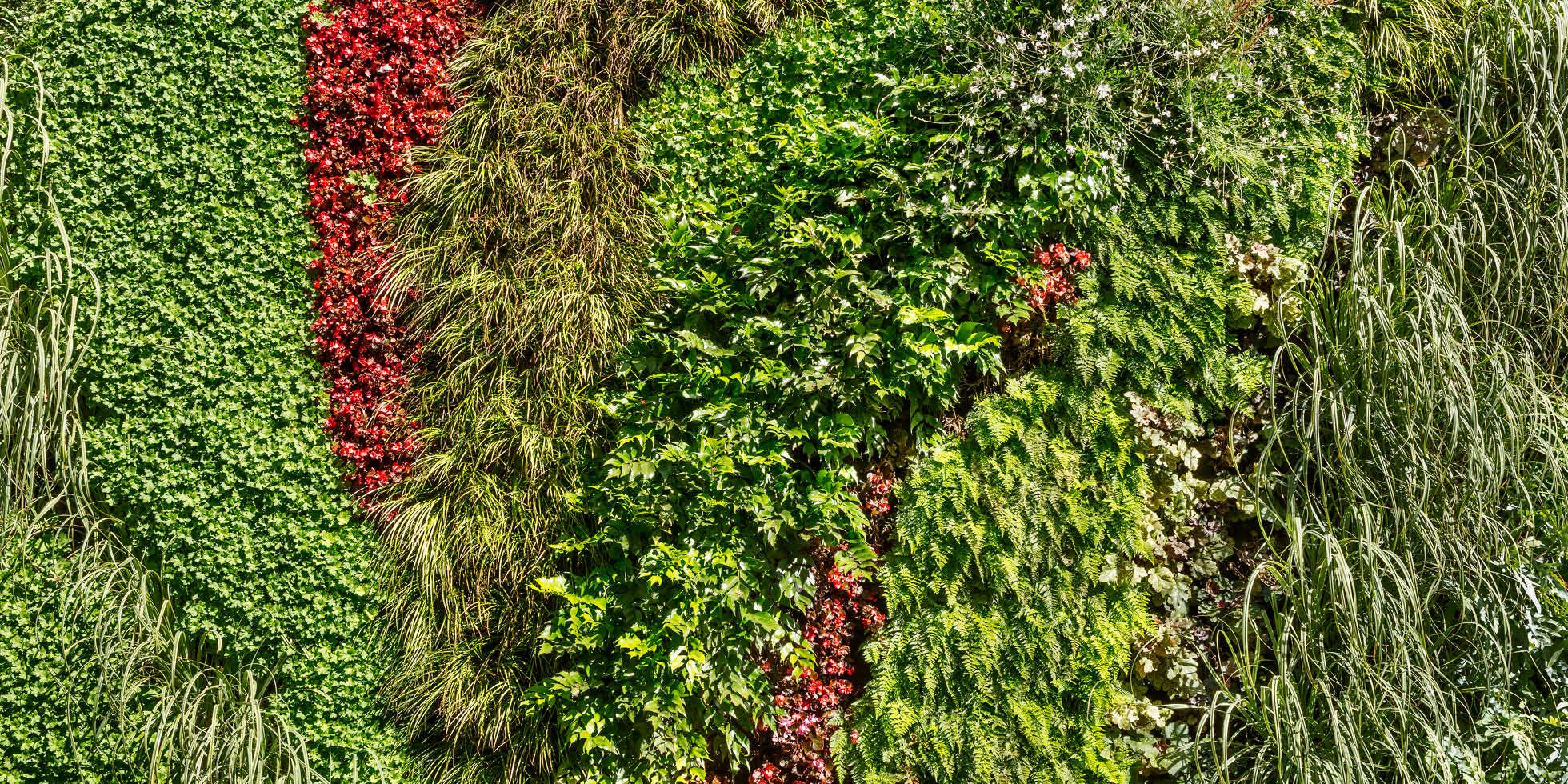 Westfield Century City Living Wall By Habitat Horticulture  View