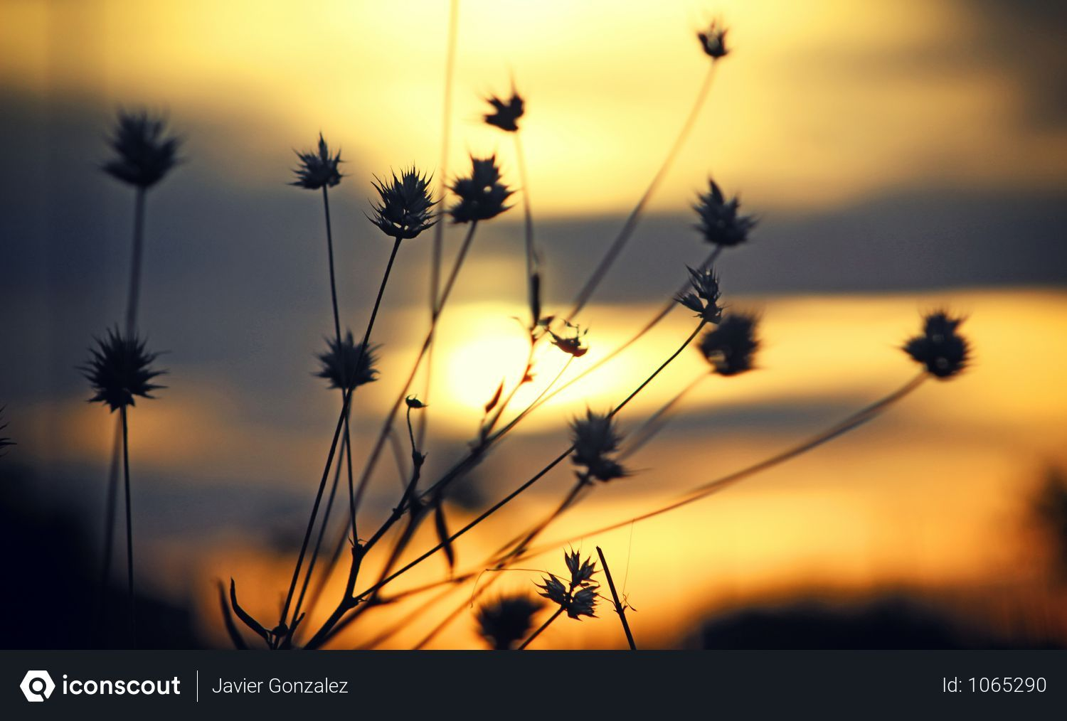 Free Silhouette Photo Of Plants In Morning Photo download