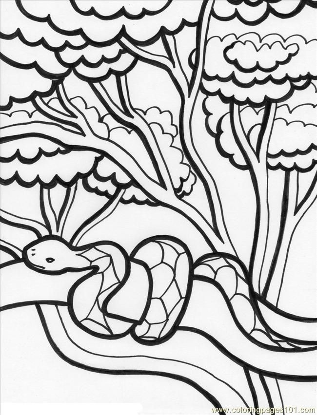 Free Printable Coloring Pages Of Forest Animals