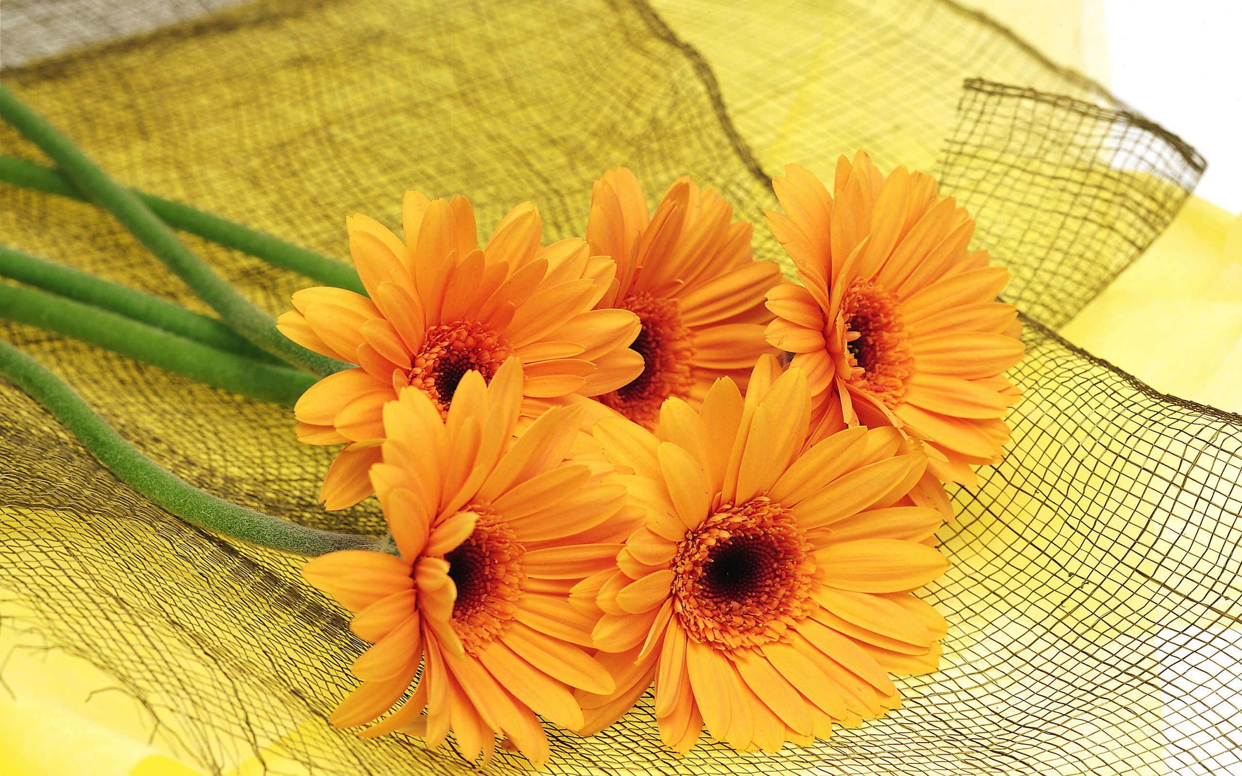 Orange Orange Flowers Wallpapers Pictures Photos Images My