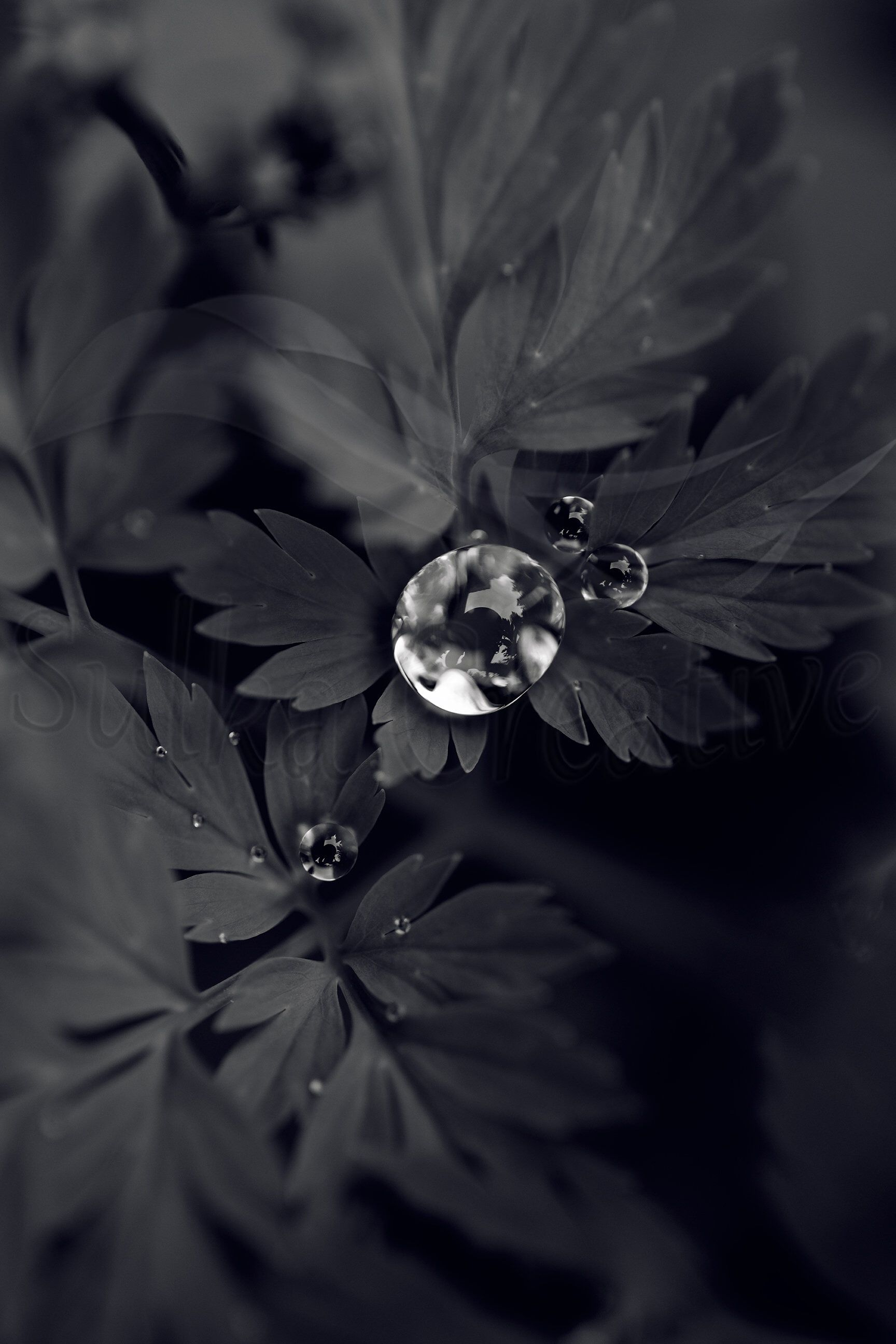 Printable Black And White Dew Drop Photography Nature Photography Trees Dew Drop Photography Nature Photography