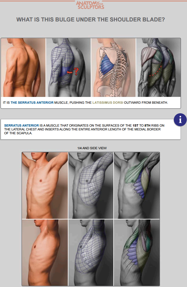 b30b6fb1c0e388a548299dce3b02a20a.png (637×977)   anatomia ...