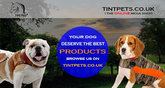 Tintpets The Uk S Largest Online Pet Shop With Fast Delivery And Low Prices Puppy Harness Dog Accessories Your Dog