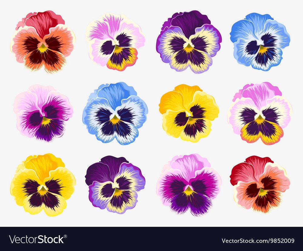 Vector Set Of Vibrant Detailed Pansy Flowers Download A Free Preview Or High Quality Adobe Illustrator Flower Illustration Watercolor Flowers Tutorial Pansies