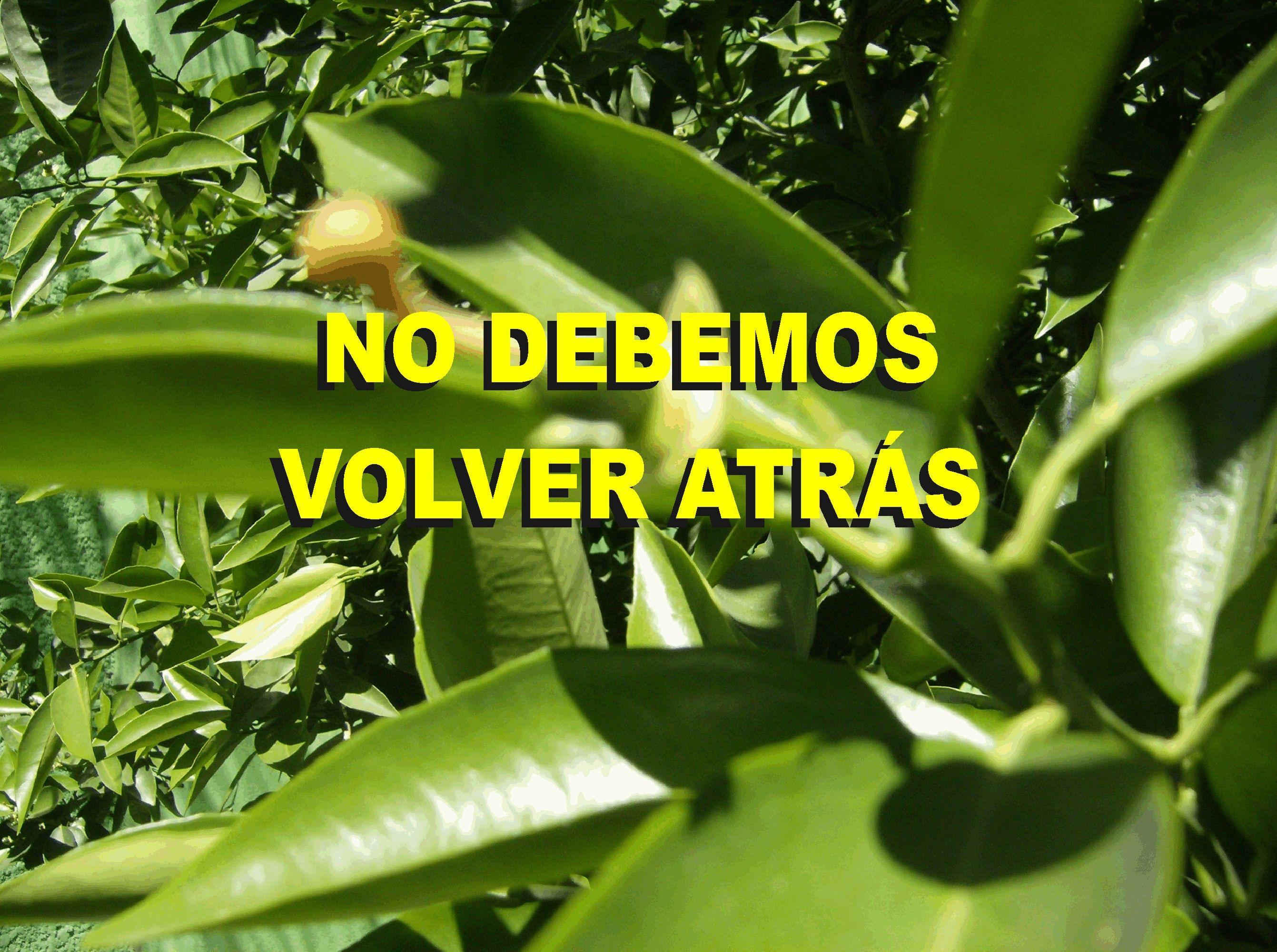 NO DEBEMOS VOLVER ATRÁS