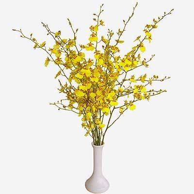 Yellow Oncidium Orchid Oncidium Orchids Oncidium Flowers Uk