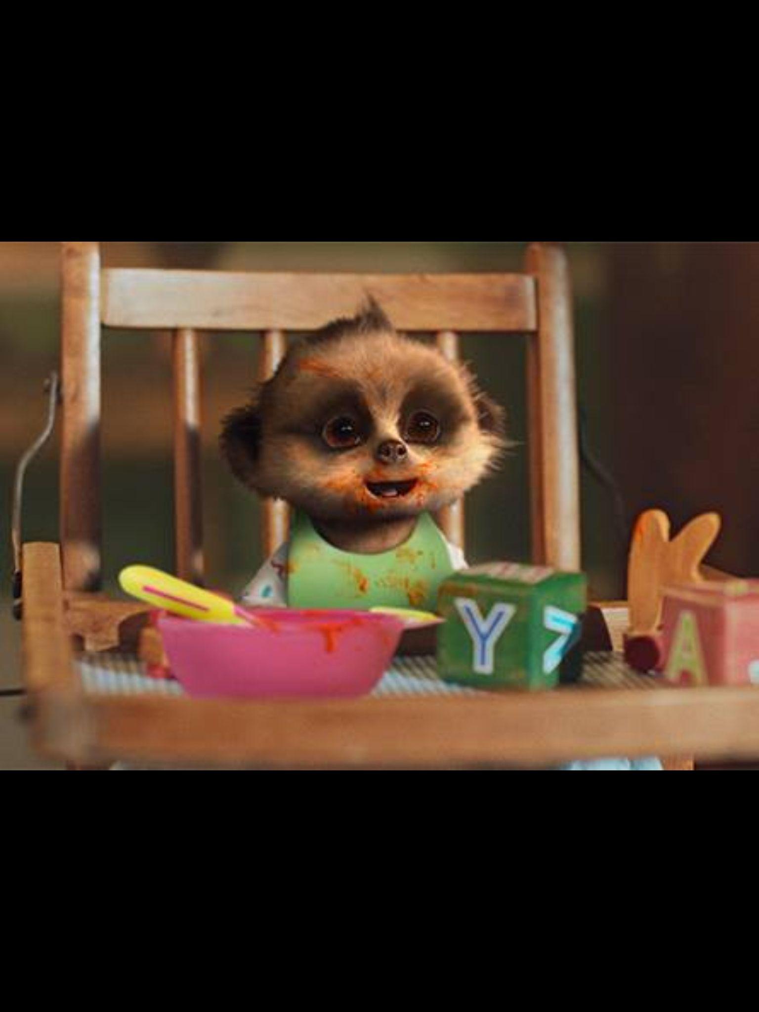 Baby Oleg eating his curry! | Meerkats | Baby meerkat, Best