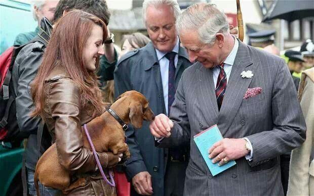 A Royal Weenie Greeting Dachshund Dachshund Lovers Prince Charles