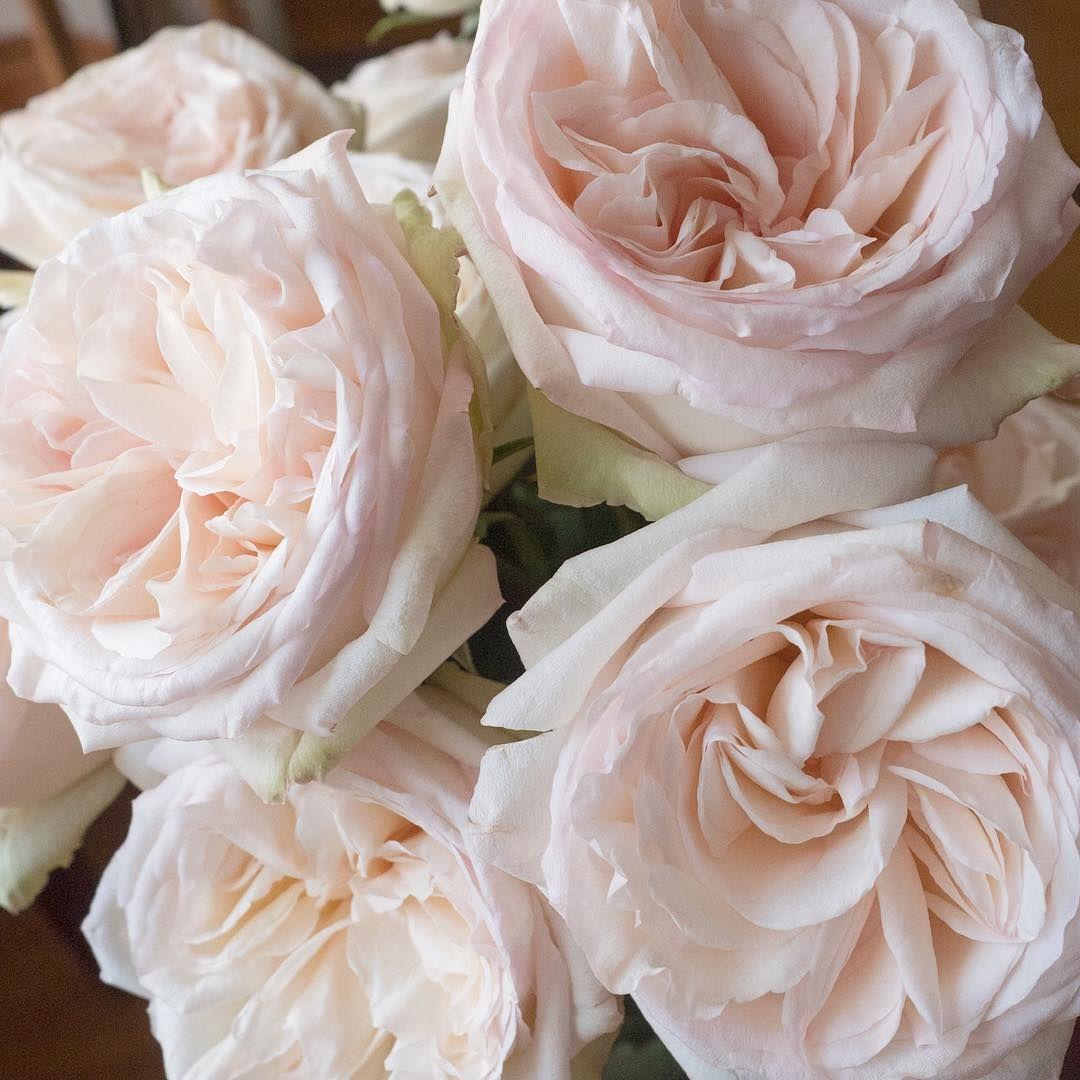 Magical White O Hara Garden Rose Garden Rose Bouquet O Hara