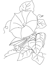 image result for morning glory coloring page