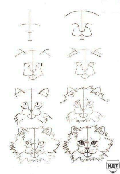 Pin Von N Apelsina Auf Risunki Katze Zeichnen Zeichnen Katze Malen