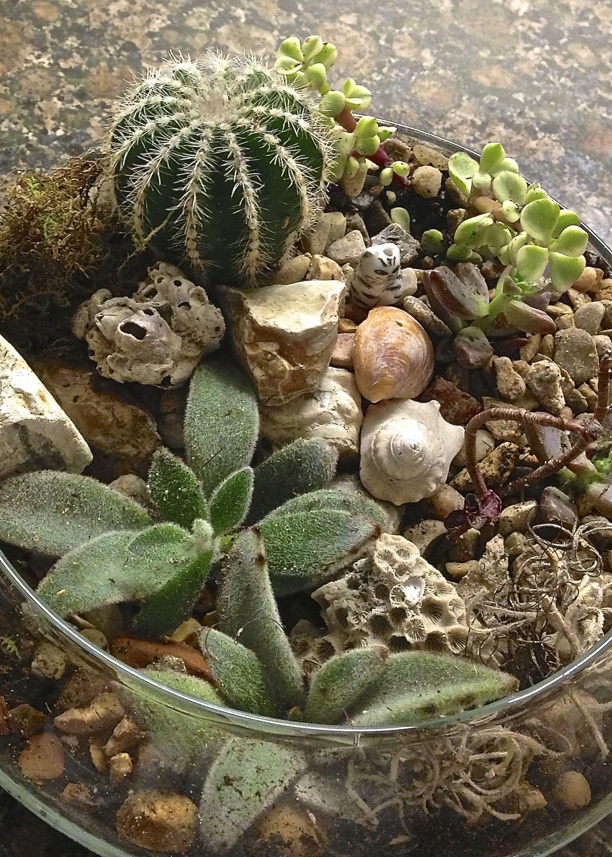 DIY cactus and succulent terrarium! | Indoor Plants | Pinterest ...