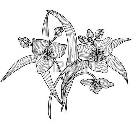 Élégantes fleurs de lys décoratives, éléments de conception. Branche fleurie. Décoration florale pour les invitations de mariage vintage, cartes de voeux, des bannières.