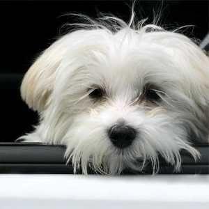 Welcher Hund Passt Zu Mir Hunderassen Kleine Hunde Welcher Hund Malteser Hund