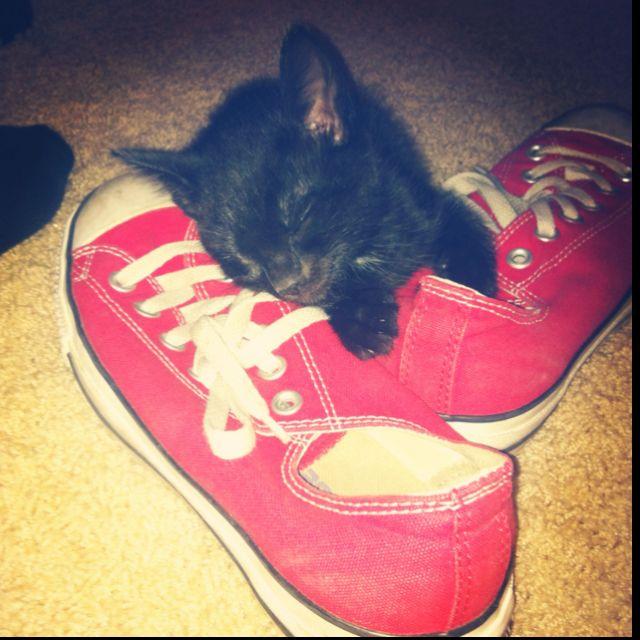 My kitten, SALEM.