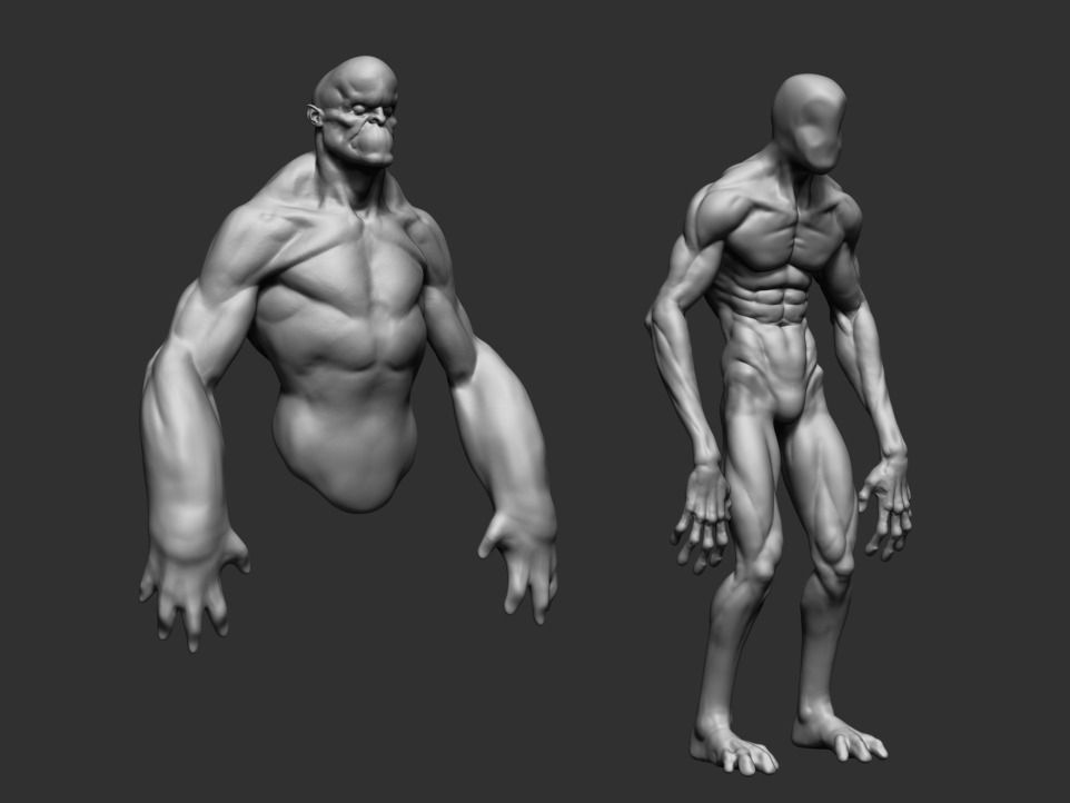 Body Forms | 3D model | 3d, Anatomy and Characters