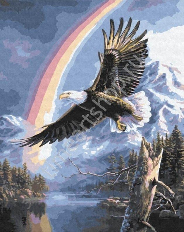 Орёл и радуга, картины раскраски по номерам, размер 40 ...