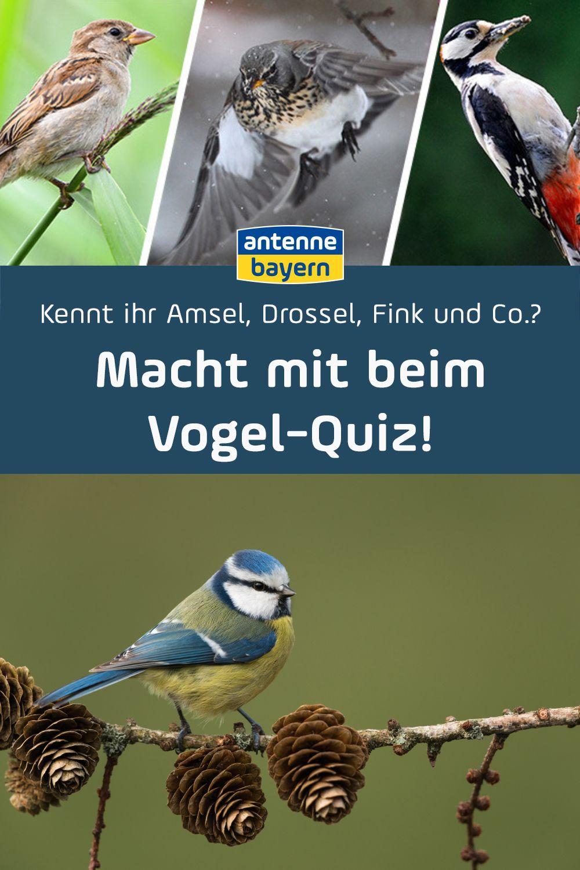 Kennt Ihr Amsel Drossel Fink Und Co Macht Mit Beim Vogel Quiz