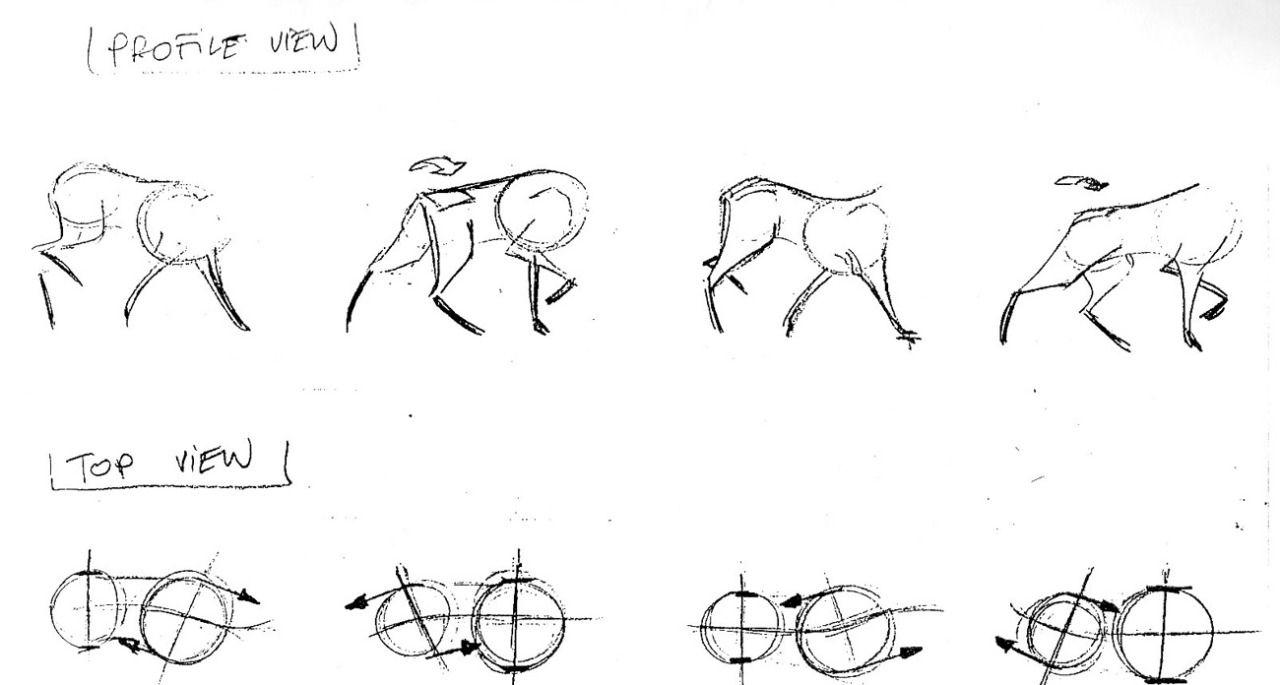 Dog shoulder & hip girdles walk cycle, side view | Dog anatomy ...