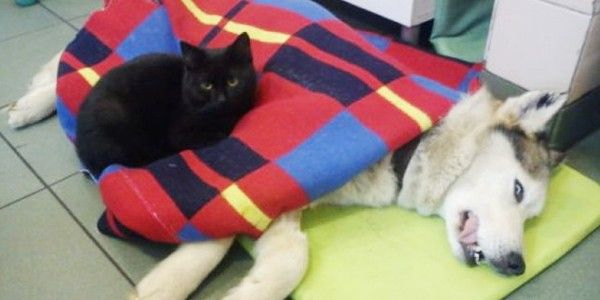 Rademenes ist die fürsorglichste Katze, die wir je gesehen haben! In einer Tierklinik in Polen kuschelt er mit allen vierbeinigen