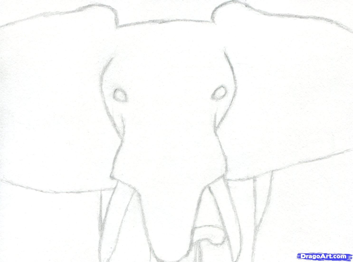How To Draw An Elephant Head, African Elephant Step 3