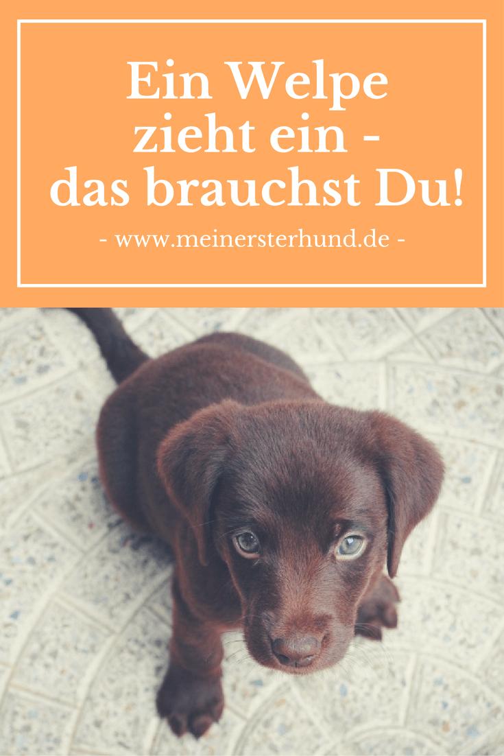 Erstausstattung Welpe Das Brauchst Du Mit Bildern Welpen Hunde Hunde Welpen
