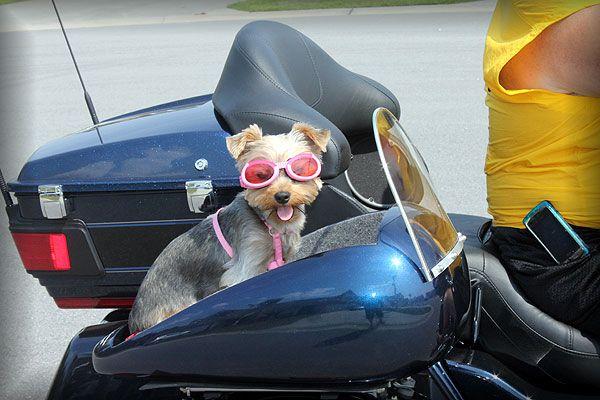 Motorcycle Trike Pet Carrier Trikes N Stuff Dog