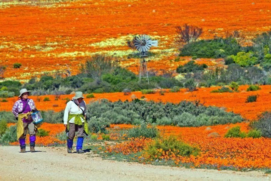 Image result for Namaqualand - Africa's Desert Garden - The Secrets of Nature images