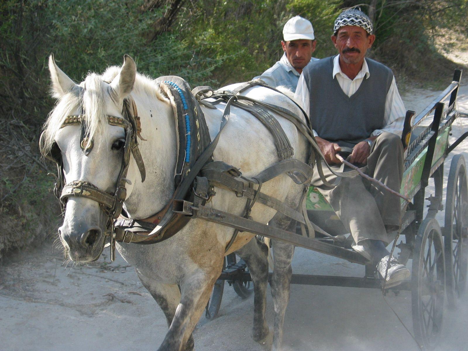 Kappadokien, Idylle mit Pferd und Wagen